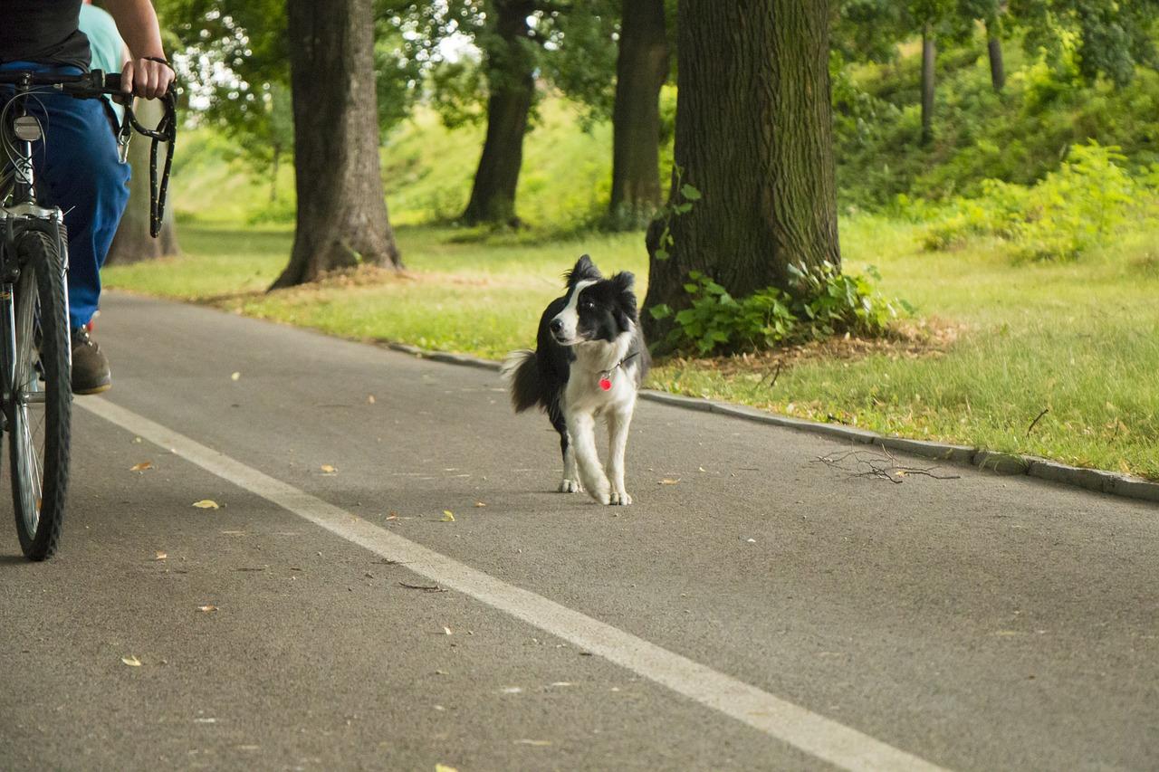 Fahrradfahren mit Hund: Dies gilt es zu beachten!